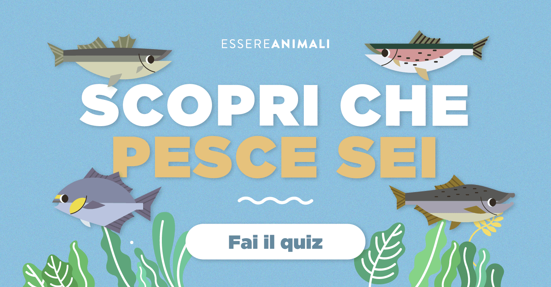 Quiz Ecologia Per Bambini di che pesce sei? te lo dice essere animali - radioveg.it