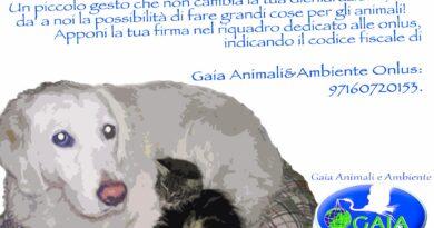 GAIA ANIMALI E AMBIENTE