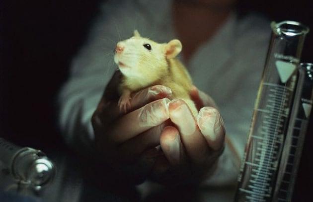 animali da laboratorio