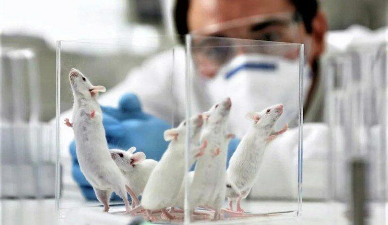 LEAL vivisezione