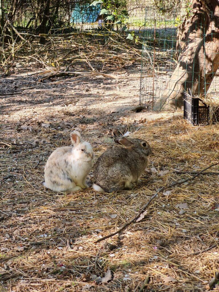 made in bunny coniglietti