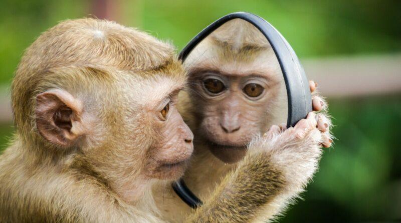 scimmie embrioni