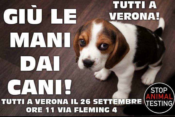 manifestazione verona beagle